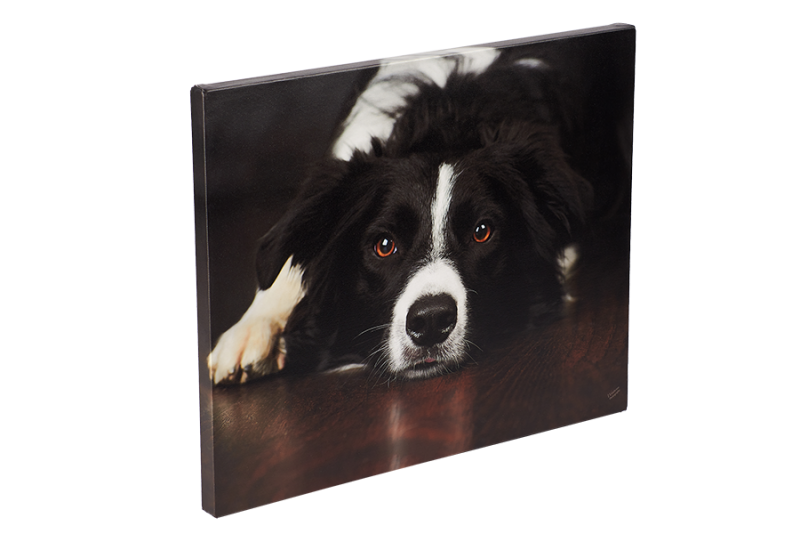 sheep dog pets pet portrait canvas product finished high quality photography melton rutland belvoir nottingham